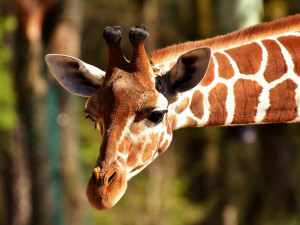 Olomoucká zoo se ve čtvrtek po 55 dnech otevře veřejnosti!