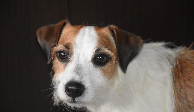 Agresivní pes agresivního majitele pokousal jiného psa i jeho paničku