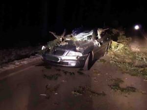 Silný vítr zaměstnává hasiče v kraji, odklízejí popadané stromy na silnici nebo na rozvody elektřiny
