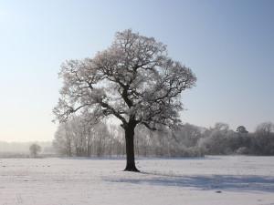 Jak bude v lednu? Očekává se běžné lednové počasí, mrznout má v noci