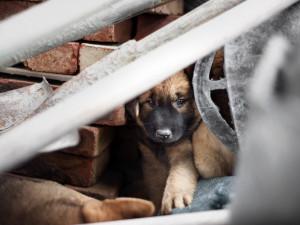 Stinná stránka silvestrovských oslav. Psí detektivové evidují rekordní počet zaběhnutých psů