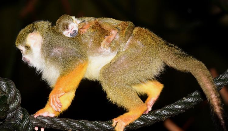 FOTO: Olomoucká zoo uvítala první letošní mláďata. Kdo si letos připsal prvenství?