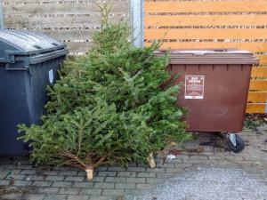 Svoz vánočních stromků je v plném proudu, stane se z nich hnojivo