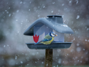 Ptačí hodinka se blíží. Lidé po celé republice budou během víkendu opět počítat ptáčky na krmítku