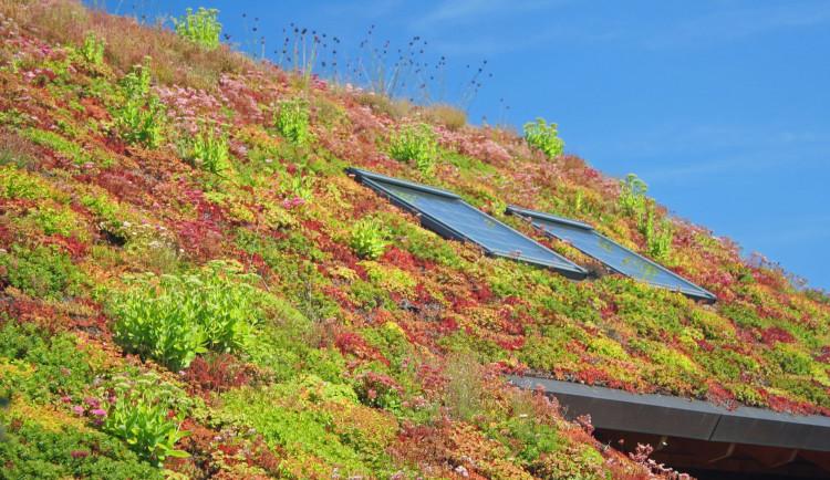 Střecha Domu dětí a mládeže bude pokryta vegetací, rekonstrukce začne v září