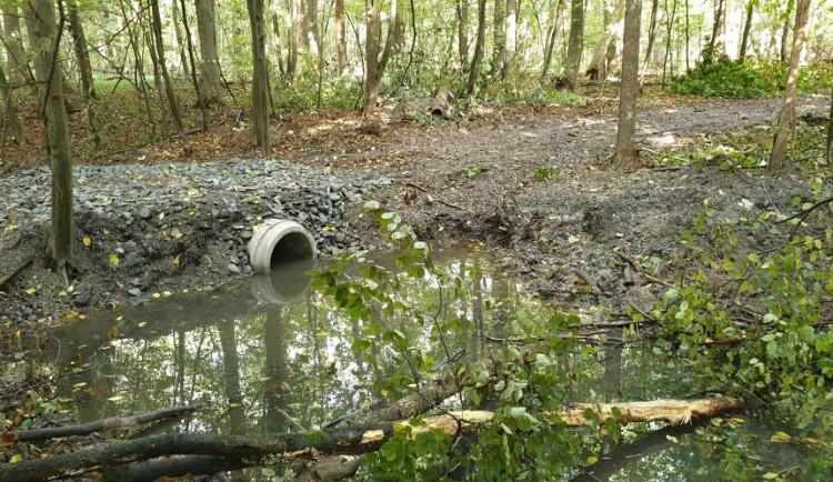 Přírodní rezervace Žebračka se čistí od popadaných stromů. Voda se díky tomu dostává do vyschlých míst