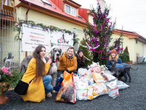I přes krizi se olomouckým dobrovolníkům podařilo uspořádat sbírku pro psí útulek