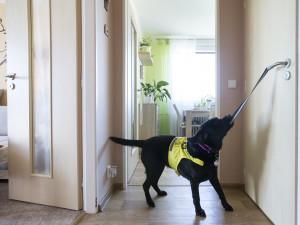 Pomocné tlapky vychovávají asistenční psy už 20 let, každý je vycvičen na míru