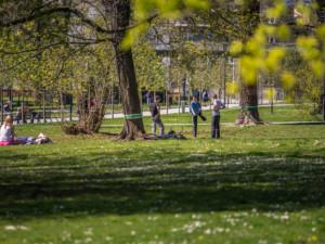 Údržba veřejné zeleně v Olomouci stojí ročně 100 milionů. Nejvíc jde na trávníky