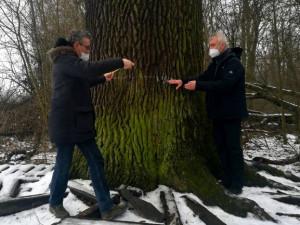 Radnice upraví okolí památného dubu v lese Království u Grygova