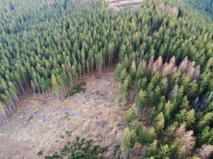 Ekologičtí aktivisté kritizují správu chráněné oblasti Jeseníky, že nepokutuje těžbu