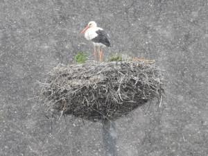 Na střední Moravu přiletěli první tažní ptáci. Jaro je tady, oznámili ornitologové