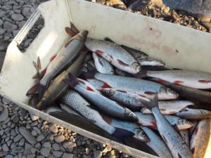 Olomoucký kraj pomůže rybářům s likvidací otravy v řece Bečvě