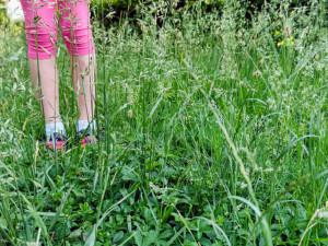 Olomoučané si stěžují na neposekané trávníky. Firma dostane pokutu