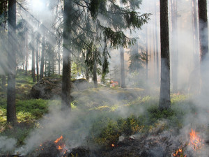 Meteorologové varují před vysokými teplotami a rizikem požárů