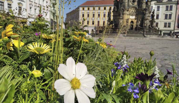 Centrum Olomouce oživila kvetoucí výzdoba. Novinkou bude odpočinkový koutek pod slunečními hodinami