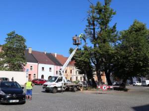 Staré lípy na náměstí v Přerově čeká kácení. Nových stromů bude méně