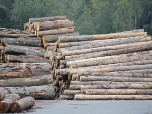 Ekologové kritizují výjimky na zásah vůči kůrovci v cenných lokalitách Jeseníků