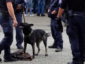 Policisté při razii dopadli mladíka s desítkami psychotropních lysohlávek