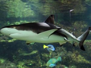 Olomoucká zoo poskytla azyl samici žraloka, jejíž akvárium zničilo tornádo