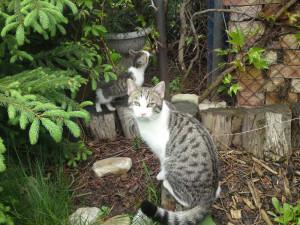 Prostějov opět přispěje na kastraci toulavých koček. Chce zabránit jejich přemnožení