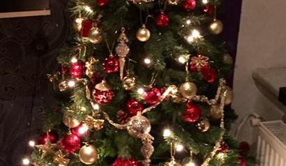 Čtenářská fotogalerie vánočních stromečků