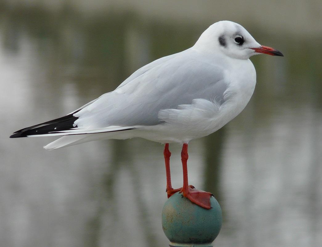Obrázek velkých ptáků