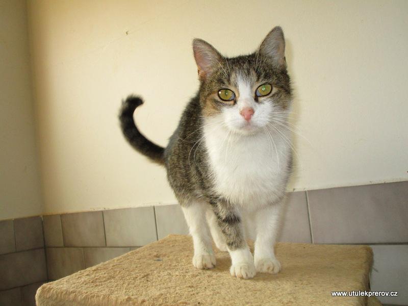 konečný kočička obrázky